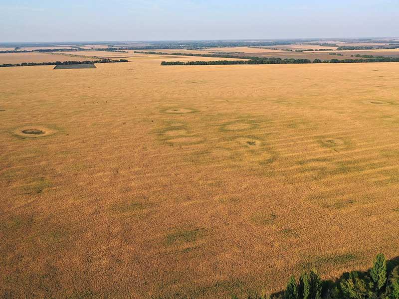Видеокадр над полем с дрона