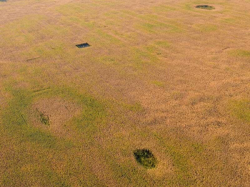 Снимок поля с дрона